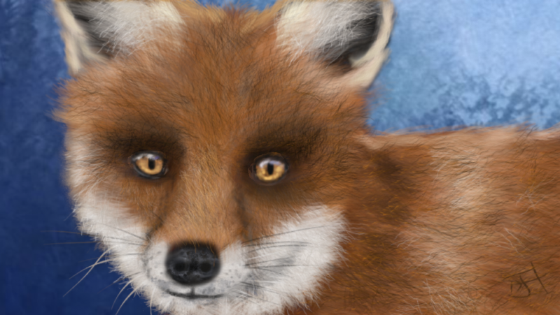 Click image for larger version.  Name:Foxy2.jpg Views:109 Size:41.6 KB ID:92784