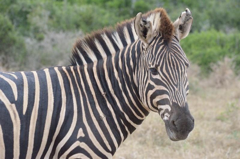 Name:  1975173-Sudafrika_20150311_0213-800x530.JPG Views: 303 Size:  124.3 KB