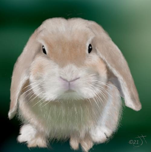 Name:  Lop eared rabbitAR (1).jpg Views: 41 Size:  137.4 KB