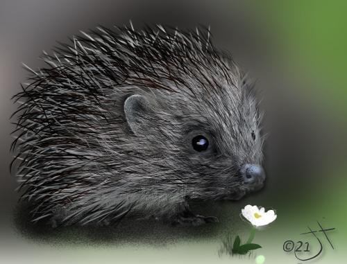 Name:  Prickly HedgehogAR.jpg Views: 52 Size:  136.0 KB