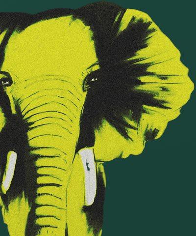 Name:  slon.jpg Views: 204 Size:  41.3 KB