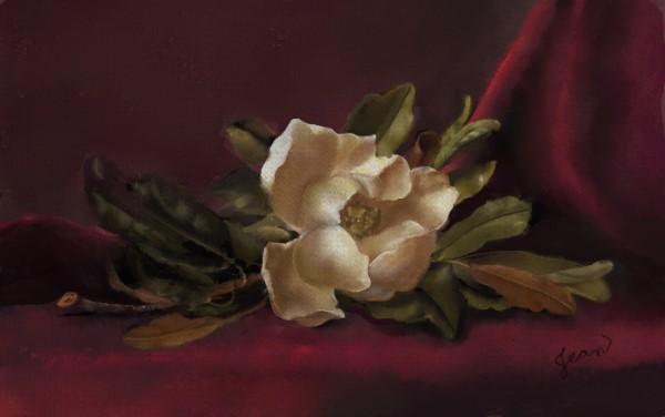 Name:  red magnolia.jpg Views: 102 Size:  32.3 KB