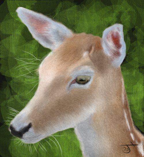 Name:  Deer.jpg Views: 145 Size:  66.8 KB