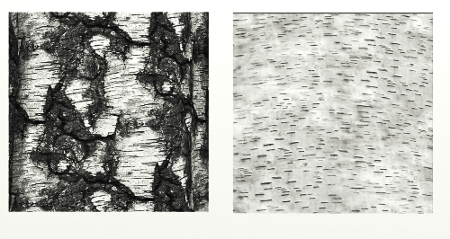 Name:  Tree Bark.png Views: 180 Size:  181.7 KB