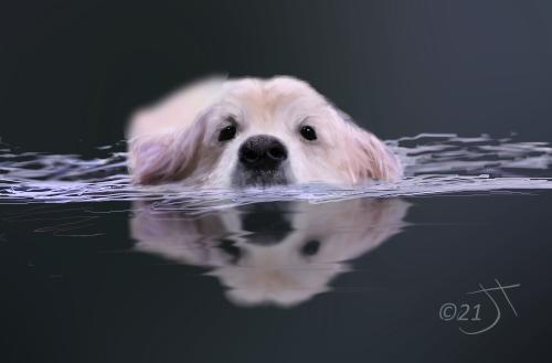 Name:  SwimmingAR.jpg Views: 59 Size:  60.5 KB