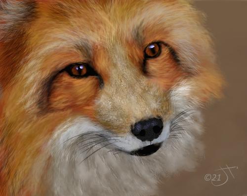 Name:  fox faceAR.jpg Views: 88 Size:  145.8 KB
