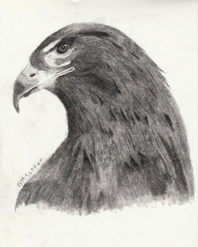 Name:  falcon.jpg Views: 107 Size:  135.8 KB
