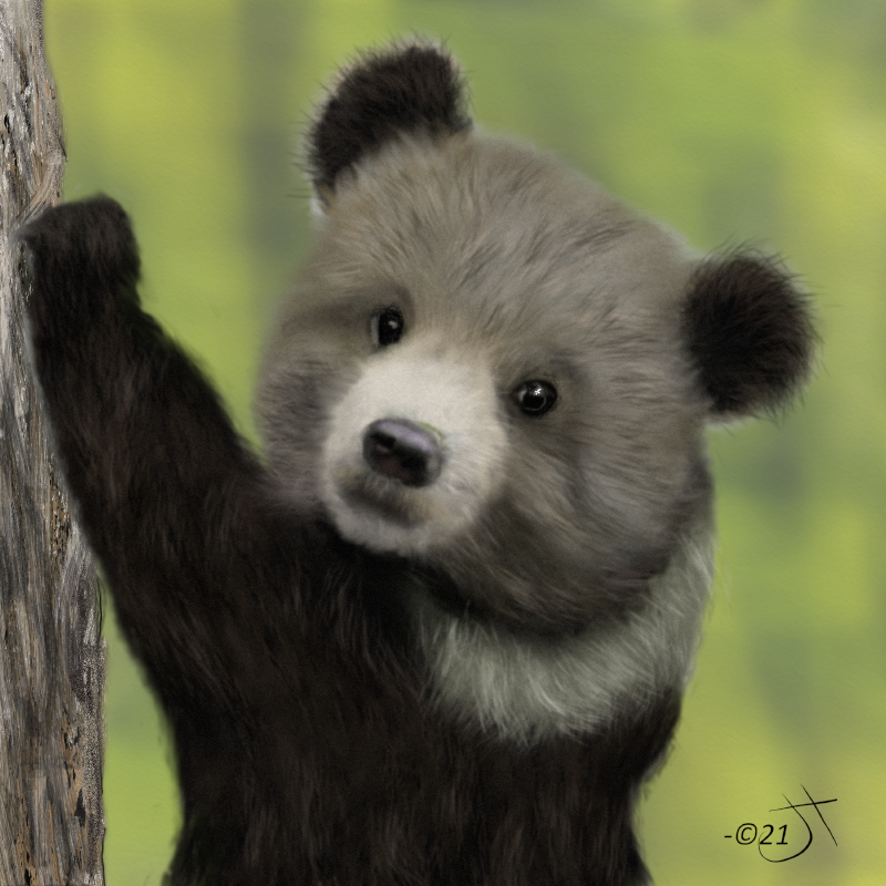 Click image for larger version.  Name:Grizzly bear cubAR.jpg Views:19 Size:51.4 KB ID:100885