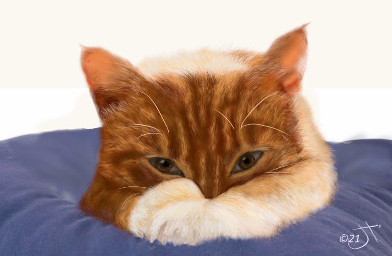 Name:  Ginger caARt.jpg Views: 43 Size:  196.1 KB