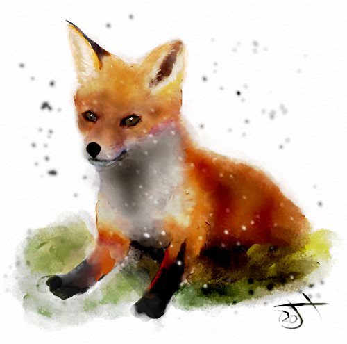 Name:  Fox cub.jpg